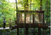 tree houses / by Elizabeth Smith