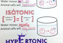 Biology stuff