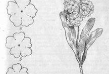 floraldraw