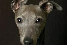 Puppy Love / Favorite dog breeds