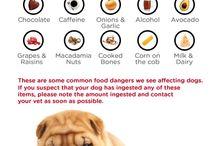Dogs / Info