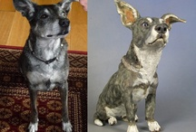 Cattle Dog