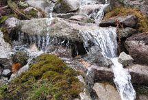 Water and rock garden