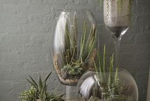 piante nei vasi di vetro