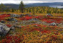 Finland nature
