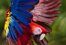 not mine but wonderful   birds