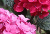 * Flores y plantas *