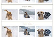 Hundefotografie & Bildbearbeitung