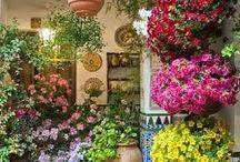 fiori bellissimi, /  fiori di tutti i tipi