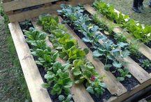 Garden vegetable yard