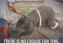 Circuses / by Animals Voice