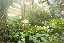 Le jardin aux papillons / Vue générale du jardin aux papillons Garden of butterflies