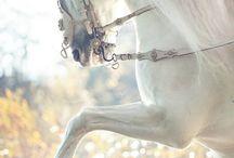 Horses. The most beautiful creature ❤️