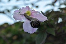 Slakken / Over slakken in de tuin
