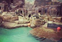 Penguins / Como Zoo's Penguins