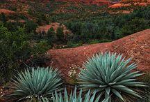 Sedona / Beautiful scenery