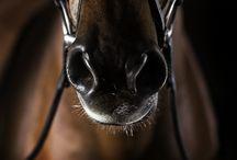 Equus / unique horse photography / by Myrical Gratton