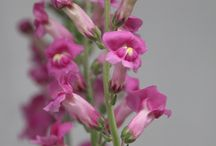 Pink Flowers! / Lots of different flowers in every shade of pink!