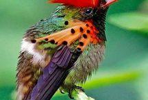 Petit oiseaux