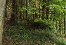 Forest Of Dean Guide / Forest Of Dean Guide