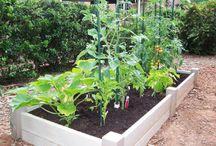 gardening / by Christy Hamilton