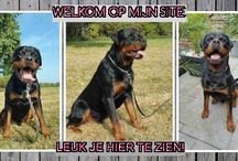 love rottweilers.nl