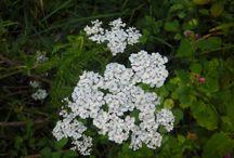 Plants & Flowers / Che meraviglia la natura! Racchiusa nelle piante facendogli assumere le forme più strane... E che dire della meraviglia dei fiori. tutti...dal semplice fiore di campi ai fiori coltivati. Rubo sempre queste immagini che la natura ci dona, e le imprigiono nelle mie foto