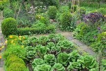 flower/veggie garden