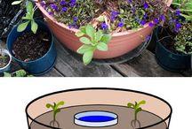 Plants, potting, vegetables, cuttings etc