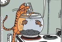 Cute & funny cats