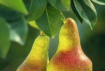 Pears / by Mukesh Chakarwarti