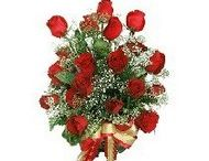 Send flowers to Bhilai / Bring a warm smile on your loved ones face with this amazing and beautiful flowers.elegantly.make the day as amazing as your special ones. http://www.onlinedelivery.in/flowers-delivery-in-bhilai.aspx