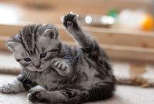 Koty cats chats