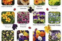 gyógyító virágok
