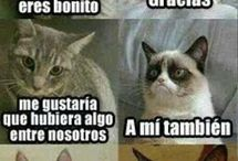 Chistesgatos e.c.t