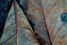 bladeren natuur