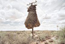 Kgalagadi Desert