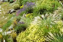 Drought resistant garden / Gardening amongs bouldels