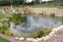 Water plants for natural swimming ponds / The purpose of plants in natural swimming ponds apart from aesthetical values and bringing nature closer to the garden, are to remove unwanted waste products from the water.