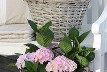 Blumen& Garten
