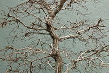 Love of Trees