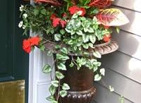 Gardening / by Lea Ann Johnson-Hanseth