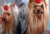 cães fofos e engraçados