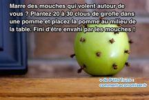 Anti mouche