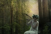 Fairy / In the forest