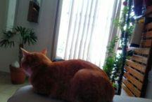Fotos My cat