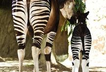 Animal Butts! / by Kristine Maurer