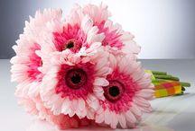 -bloemen-