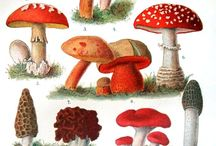 Botanical MUSHROOMS