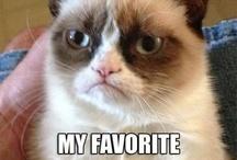 Crumpy cat / Cool